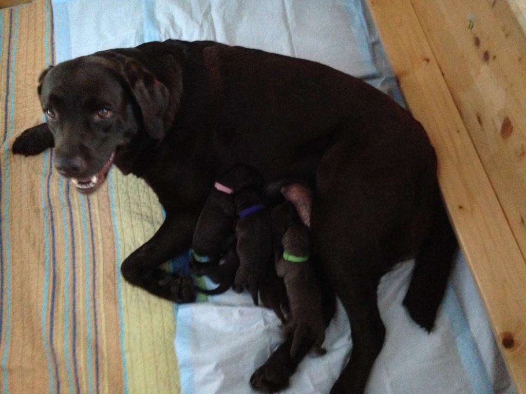 Benja direkt nach der Geburt